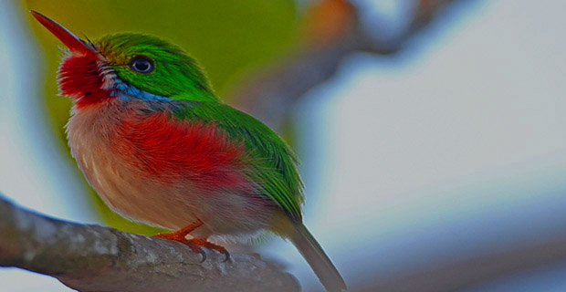 Reviews And Testimonials About Bird Watching Cuba Tours By - Cuba tours reviews
