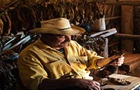 Tobacco growing farmer, Cuba Festival Tour 2019.