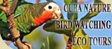 Cuba Nature & Bird Watching Tours.